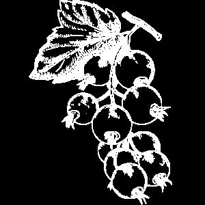 Ribisel